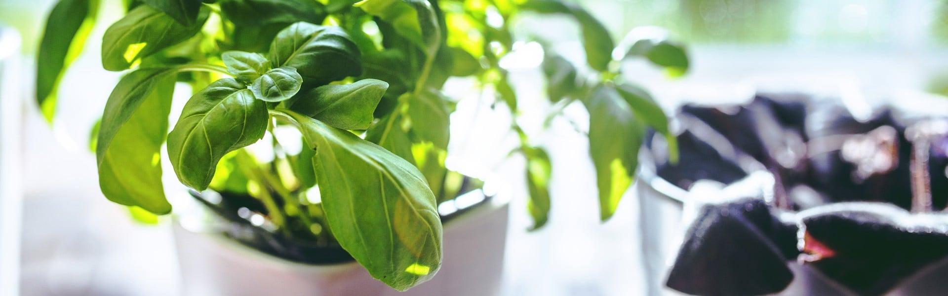 world-importados-como-fazer-horta-em-casa