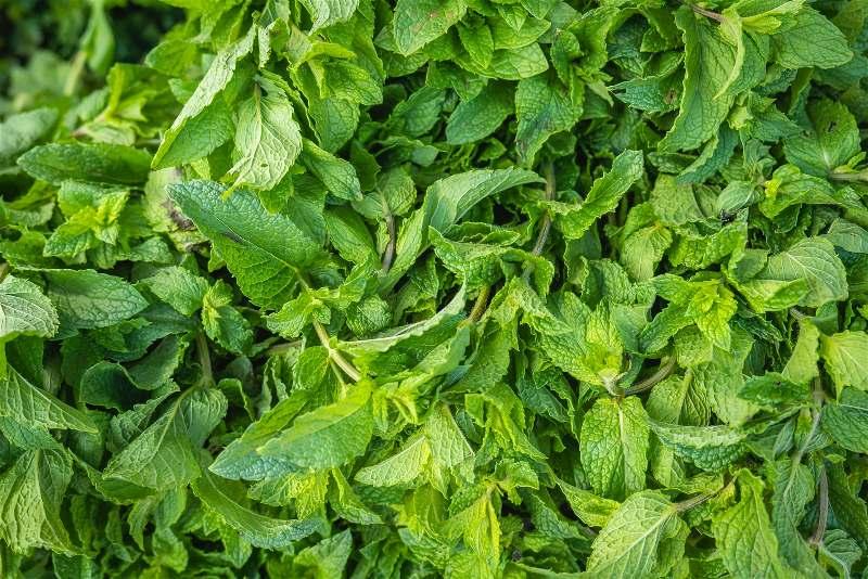 Imagens de folhas de hortelã